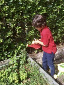 A child tending a montesori garden